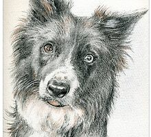 'Star' border collie extraordinaire! by Merlin Currie