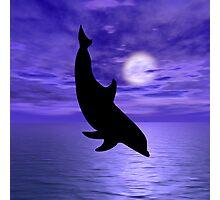 Dolphin Jump 4  Photographic Print