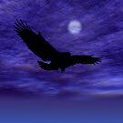 Eagle Gliding by Okeesworld