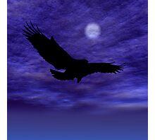 Eagle Gliding Photographic Print