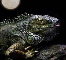 Night of the Iguana by Ann  Van Breemen