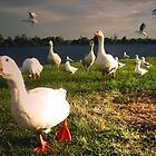 Wild Goose Chase by Louise Robinson