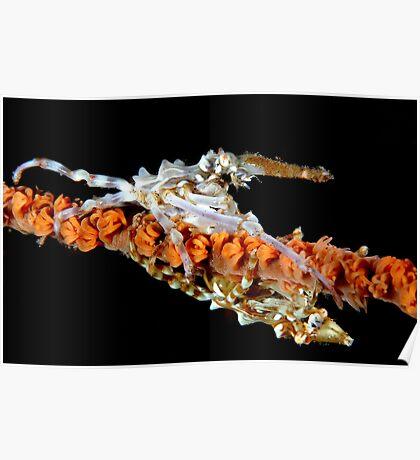 Xeno Crabs Poster