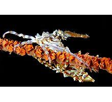Xeno Crabs Photographic Print