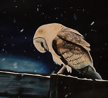 Night Owl by mmazzocco