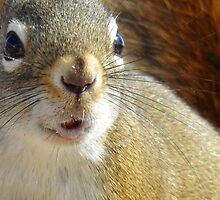 Foamy Mouthed Red Squirrel by PeggCampbell