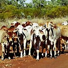 Brahman Weaners by wildfillies