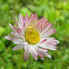 This is my flower! Mine! by Tracy Wazny
