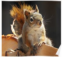 Red Squirrel on the Wood Pile Poster