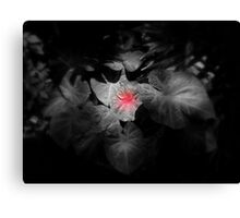 Miss Nature Blushing Under Mr Sun's Homages In Early Morning Canvas Print