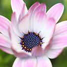 Flower Magic by Cristina Rossi