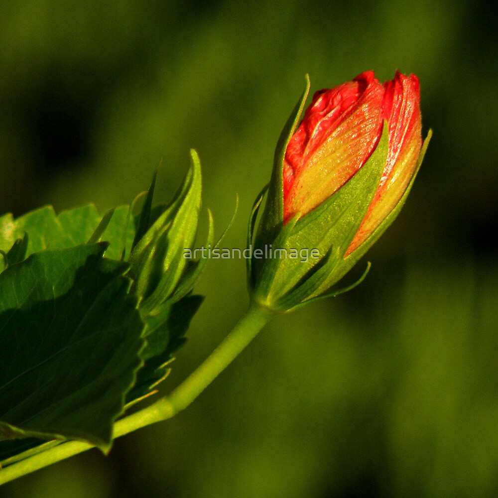 Spring Is Mother Nature's Colorist ~ Part Three by artisandelimage