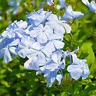 Blue Flowers by Jeff Ore