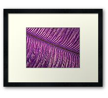 Purple Quill Framed Print