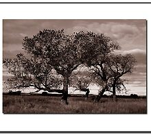 Tree Study #2  Oklahoma Panhandle by ChrisBaker