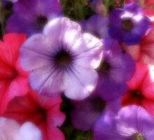 Petunias by Pamela Jayne Smith