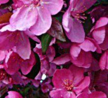 Dark Pink Cherry Blossoms Sticker