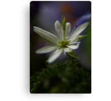 Rapsodi (from wild flowers collection) Canvas Print
