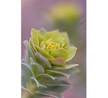 Beautiful Donkeytail Photographic Print