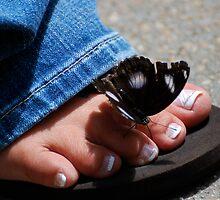 Butterfly Kisses by Pamela Hubbard