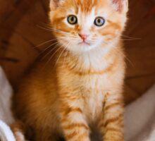 Kitten in Basket Sticker