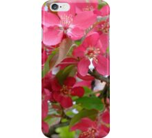 More Bright Blossoms iPhone Case/Skin