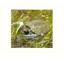 Baby snapping turtle Art Print