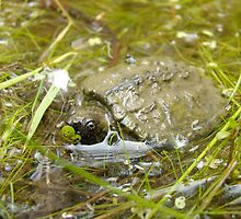 Baby snapping turtle by tantricpark182