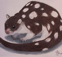 Spotted Quoll by Angie Schlauch