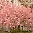 Brookline in bloom. by LudaNayvelt