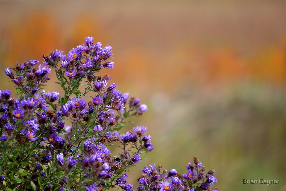 Colors of the Prairie by Brian Gaynor