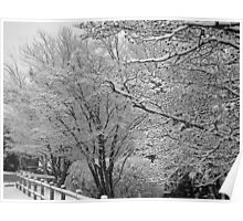 Winters Touch Black & White Poster