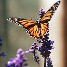 The Lilac Monarchy by Blaze66