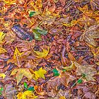 Autumn Abstract # 3 - Mount Wilson NSW - The HDR Experience by Philip Johnson