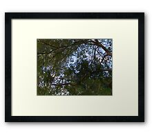 Curvilinear Branches and Lush Foliage With Fauvist Touches of Green, Purple, Blue and Orange  Framed Print