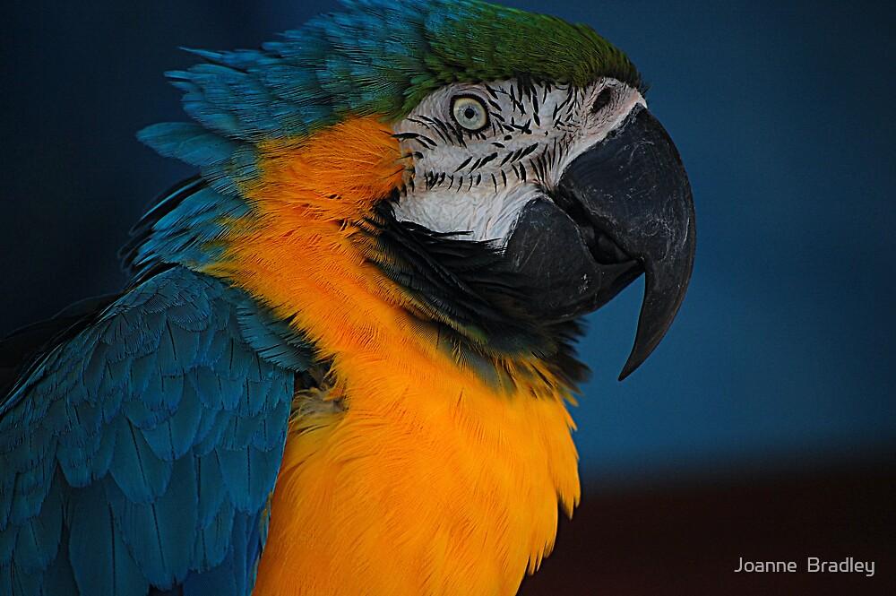 Pretty Bird! by Joanne  Bradley