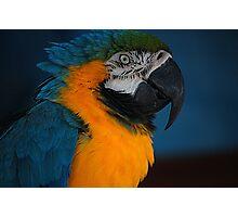 Pretty Bird! Photographic Print