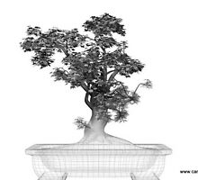 bonsai by balom