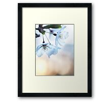 Artistic closeup of cherry blossom art photo print Framed Print