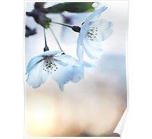 Artistic closeup of cherry blossom art photo print Poster
