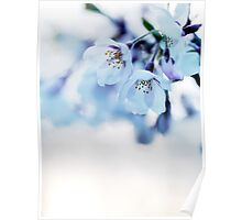 Beautiful cherry blossom flowers art photo print Poster