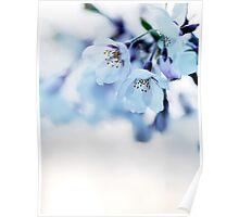 Beautiful cherry blossom flowers art photo print Poster