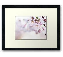 Beautiful pink cherry blossom art photo print Framed Print