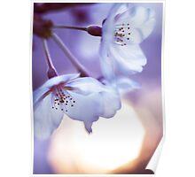 Beautiful cherry blossom and rising sun art photo print Poster