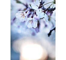 Cherry tree blossoms in morning sunlight art photo print Photographic Print