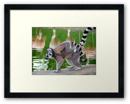 Piggyback Ride by NatureGreeting Cards ©ccwri