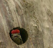 Baby Woodpecker! by Franco De Luca Calce
