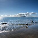 Just the feel of salt water and sand on my paws...........! by Roy  Massicks