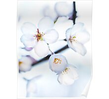 Flowers of Japanese cherry blossom art photo print Poster