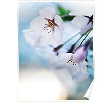 Beautiful cherry blossom flowers on blue sky background art photo print Poster